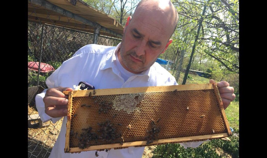 11-29-16 Bob Slanz – NY Beekeeper and Meadmaker – BtB – keeping bees-making mead