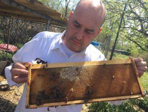 Bob Slantz works with his bees
